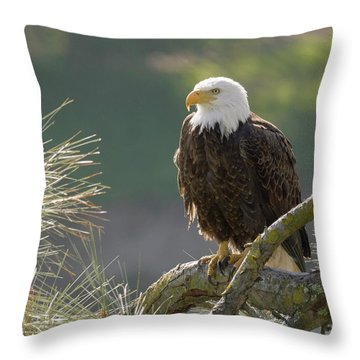 Bald Eagle Throw Pillow by Doug Herr