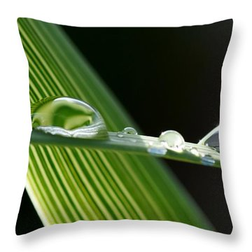 Big Rain Drops On Leaf Throw Pillow