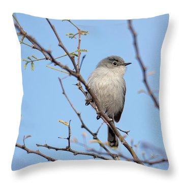 Black-tailed Gnatcatcher Throw Pillow
