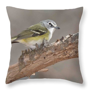 Blue-headed Vireo Throw Pillow by Alan Lenk