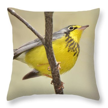 Canada Warbler Throw Pillow by Alan Lenk