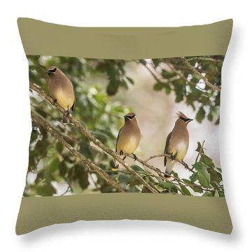 3 Cedar Waxwings  Throw Pillow