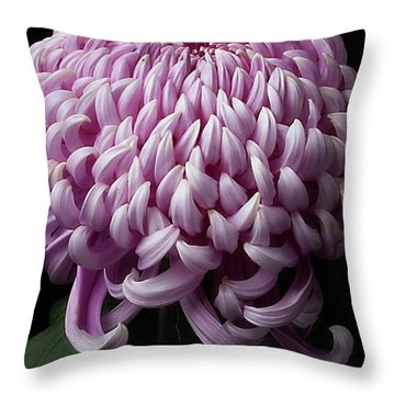 Chrysanthemum 'jefferson Park' Throw Pillow