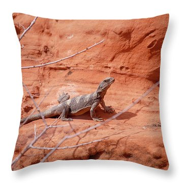 Chuckwalla, Sauromalus Ater Throw Pillow