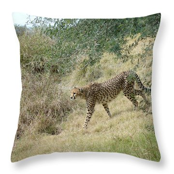 Throw Pillow featuring the photograph Descent by Fraida Gutovich