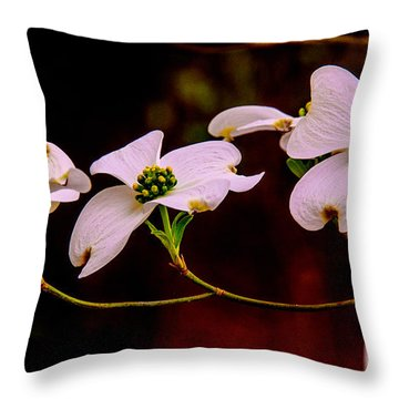 3 Dogwood Blooms On A Branch Throw Pillow