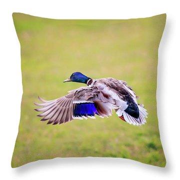 Duck-drake Throw Pillow
