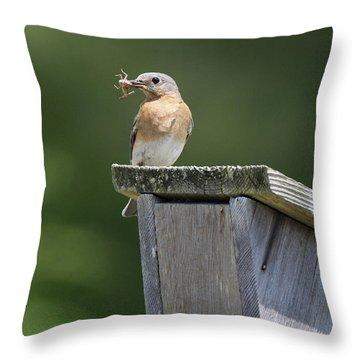 Eastern Bluebird Calverton New York Throw Pillow