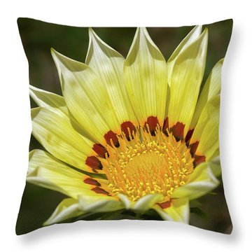 Gazania Petals Throw Pillow