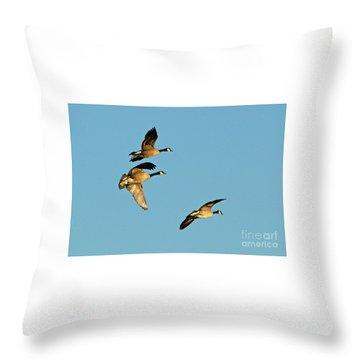 3 Geese In Flight Throw Pillow