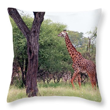 Giraffes Eating Acacia Trees Throw Pillow