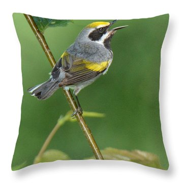 Golden-winged Warbler Throw Pillow by Alan Lenk