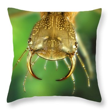 Great Diving Beetle Throw Pillow