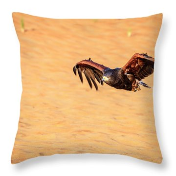 Throw Pillow featuring the photograph Harris Hawk by Alexey Stiop