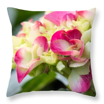 Throw Pillow featuring the photograph Hydrangea by Cathy Donohoue