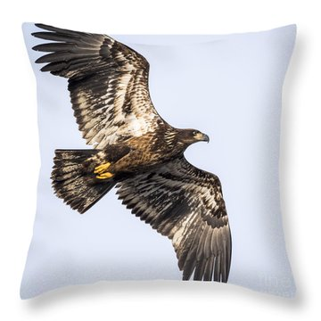 Juvenile Bald Eagle  Throw Pillow