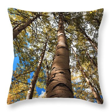 Looking Up Throw Pillow by Marilyn Hunt