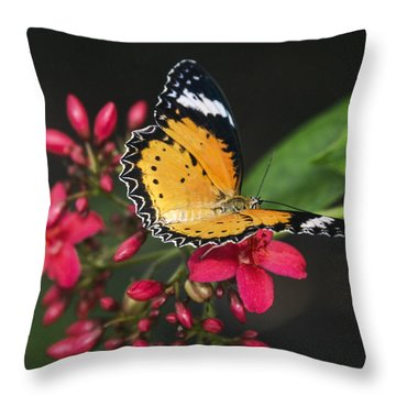 Malay Lacewing Butterfly  Throw Pillow by Saija Lehtonen