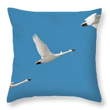 Trumpeter Swan Throw Pillows