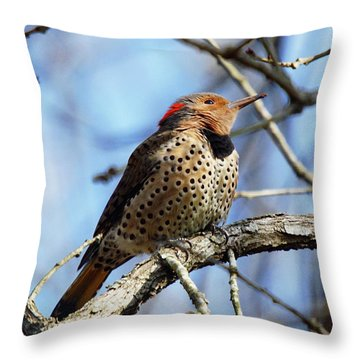 Throw Pillow featuring the photograph Northern Flicker Woodpecker by Robert L Jackson