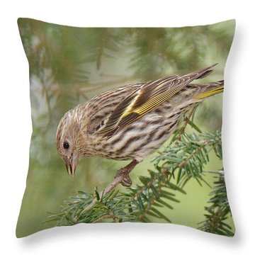 Pine Siskin Throw Pillow by Alan Lenk