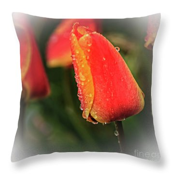 Throw Pillow featuring the photograph Red Tulip  by Robert Bales