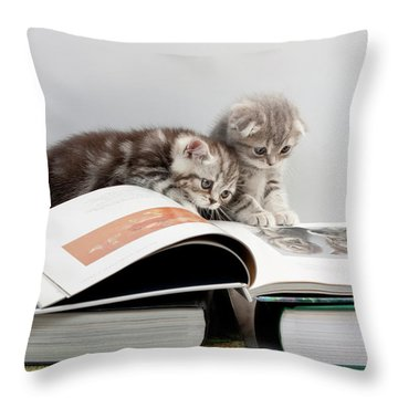 Scottish Fold Cats Throw Pillow