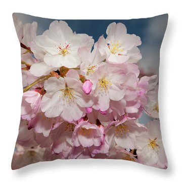 Silicon Valley Cherry Blossoms Throw Pillow by Glenn Franco Simmons