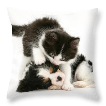 Sleeping Puppy Throw Pillow by Jane Burton