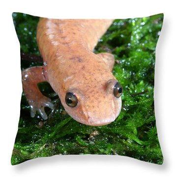 Spring Salamander Throw Pillow by Ted Kinsman