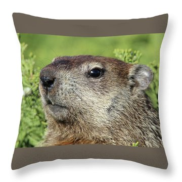 Woodchuck Calverton New York Throw Pillow by Bob Savage