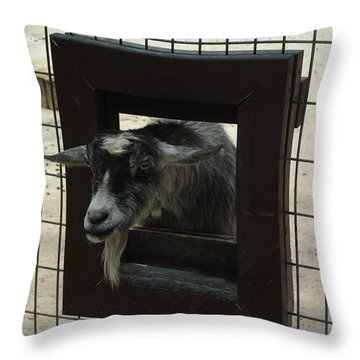 3d Tv Goat 1 Throw Pillow by Robyn Stacey