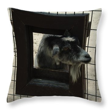 3d Tv Goat 2 Throw Pillow by Robyn Stacey