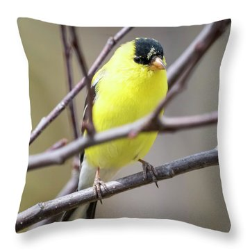 Throw Pillow featuring the photograph American Goldfinch  by Ricky L Jones
