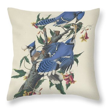 Blue Jay Throw Pillow by Anton Oreshkin