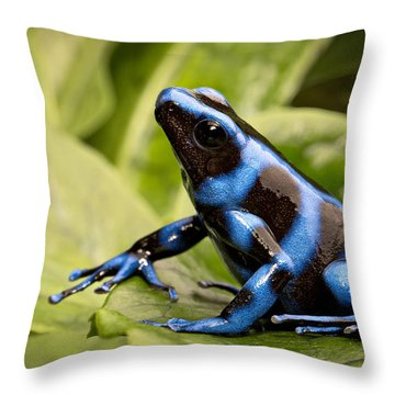 Blue Poison Dart Frog Throw Pillow by Dirk Ercken