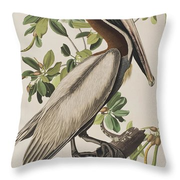 Brown Pelicans Throw Pillows