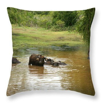 Buffalos Throw Pillow
