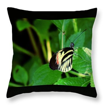 Butterfly No. 4 Throw Pillow