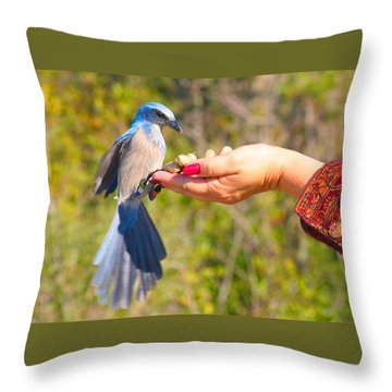 Florida Scrub Jay Throw Pillow
