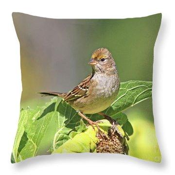 Golden -crowned Sparrow Throw Pillow