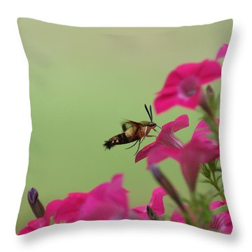 Hummer Moth Throw Pillow