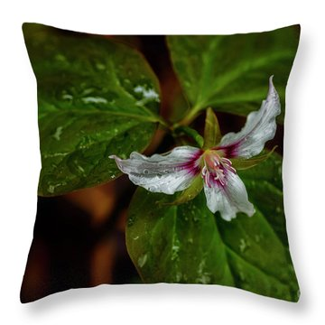 Throw Pillow featuring the photograph Painted Trillium  by Thomas R Fletcher