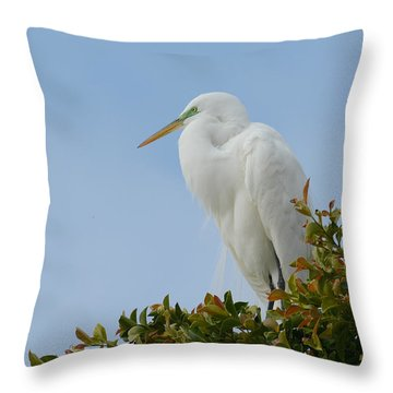 Throw Pillow featuring the photograph Poised by Fraida Gutovich