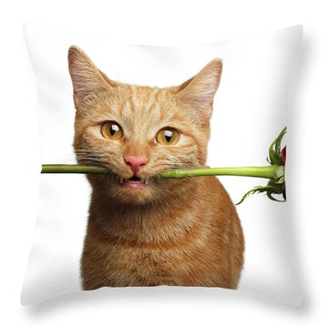 Throw Pillow featuring the photograph Portrait Of Ginger Cat Brought Rose As A Gift by Sergey Taran