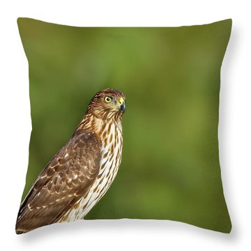 Throw Pillow featuring the photograph Red-tailed Hawk by Peter Lakomy