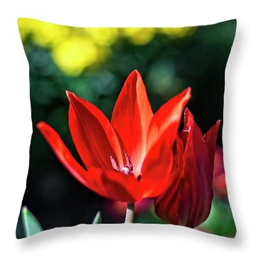 Spring Garden Throw Pillow by Miguel Winterpacht