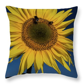 Sunflower Fields Throw Pillow by Miguel Winterpacht