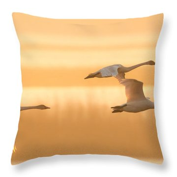 4 Swans Throw Pillow by Kelly Marquardt