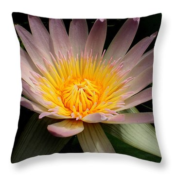 Water Lily Throw Pillow by Farol Tomson